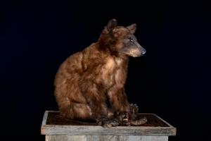Black_Bear_Cub_#_208,_for_sale,_$1000.00