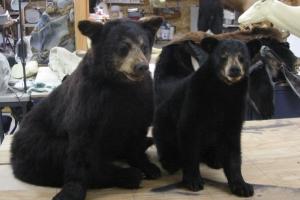 Cub_Bear_mounts,_
