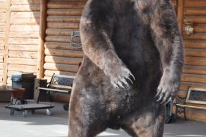 Rod_M_Bear
