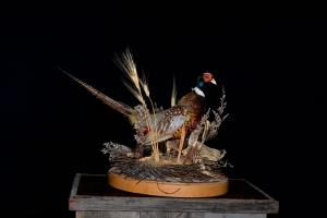 Pheasant_Mount,__#210_$200.00